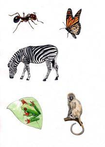 Ant_Zebra_Vervet Monkey_Tree Frog_nature_animal_mixed media_watercolour_painting_pencil_drawing_book_illustration 2