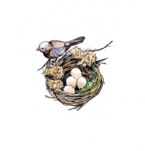 Birds nest_bird_eggs_nest_nature_animal_mixed media_watercolour_painting_pencil_drawing_book_illustration 2