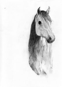 Horse_animal_nature_mixed media_pencil_ drawing_book_illustration 2