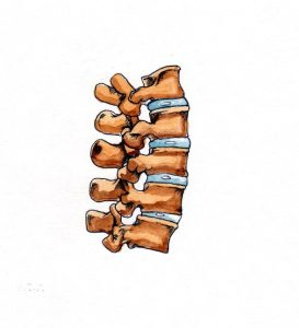human_skeleton_anatomical_spine_spinal column_joints_mixed media_watercolour_painting_pencil_drawing_book_illustration 2