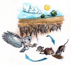 landscape_lifecycle_sun_sky_ wheat field_owl_ mouse_mixed media_ watercolour_ painting_ pencil_drawing_book_illustration 2