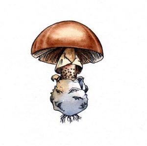 mushroom_fungus_spore_toadstool_mixed media_watercolour_painting_pencil_drawing_book_illustration 2
