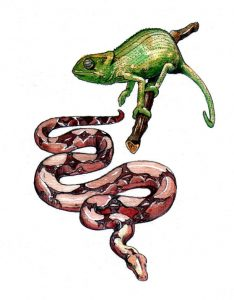 snake and chameleon_nature_reptiles_animal_mixed media_watercolour_pencil_drawing_book_illustration 2