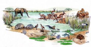 wildlife_elephant_hippo_crocodile_lion_buck_landscape_mixed media_watercolour_painting_pencil_drawing_book_illustration 2