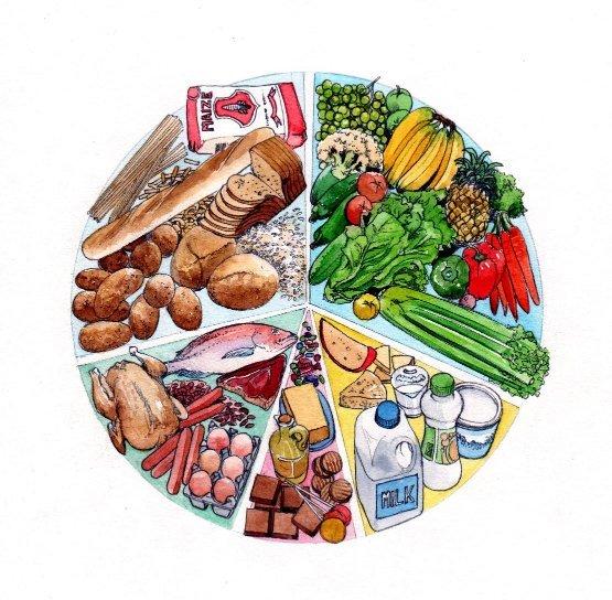 Food groups groceries milk bread fish meat food dairy vegetables book 2