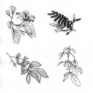Leaves seeds plants propagation nature flora black and white book 2
