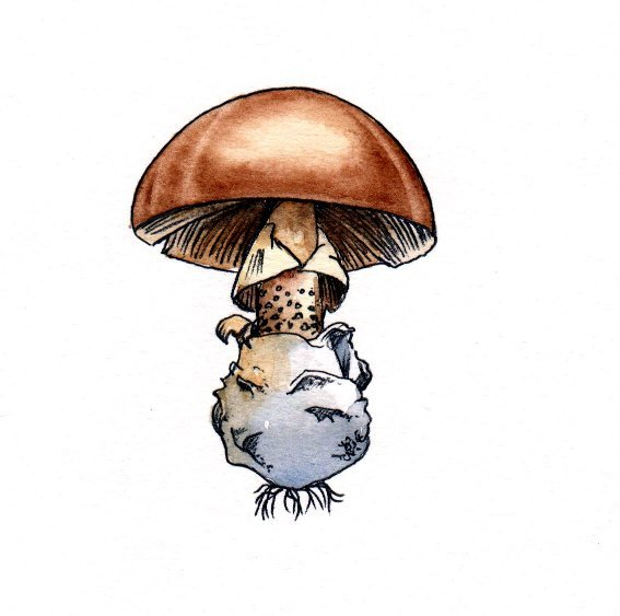 Mushroom fungus spore toadstool book 2