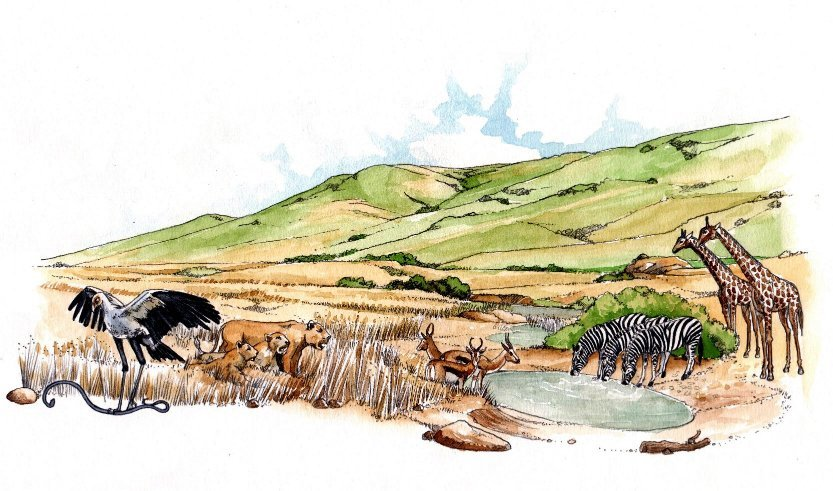 Secretary bird lions springbok giraffe waterhole book 2