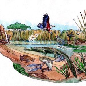 Waterhole crocodile water lifecycle fisheagle fish book 3