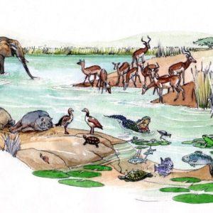 Wildlife elephant hippo crocodile lion buck book 2
